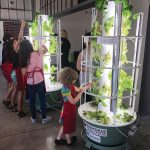 Photo of children growing lettuce in a verticle grower